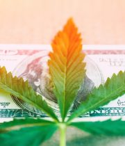 Our Top 4 Hemp Stocks for 2019 | The Green Fund